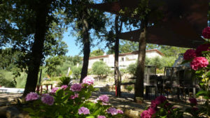 http://www.levallondesoliviers.fr/wp-content/uploads/2019/06/chambre-d-hote-provence-300x169.jpg