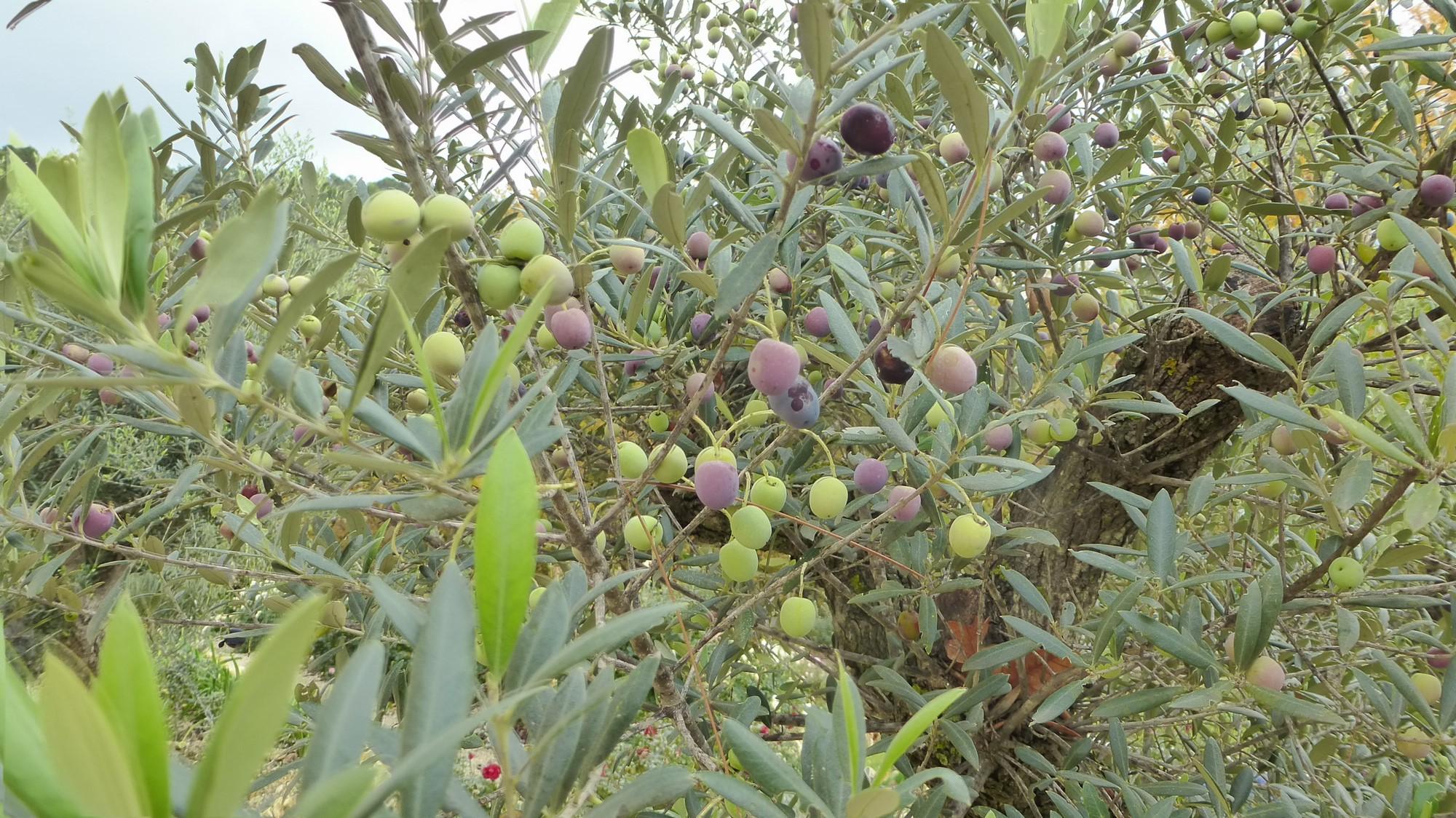 histoire-de-notre-maison-d-hotes-le-vallon-des-oliviers